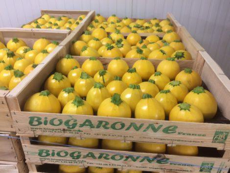 exporter des Aubergine Bio du sud-ouest